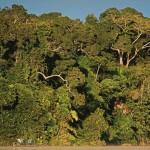 La ONU distinguirá proyectos de conservación ambiental que se ejecuta en el Parque Nacional Bahuaja Sonene.