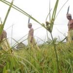 Gobierno Regional de Loreto inició el proceso de titulación para favorecer a 100 comunidades nativas. (Foto: Archivo El Comercio)