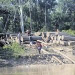 Agresión. La tala ilegal es uno de los males que lo afectan. Foto: Luis Cinturión
