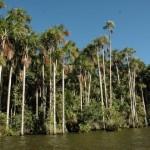 Perú y China se unen para proteger los bosques.Foto: Rolly Valdivia