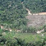 Sierra del Divisor fue oficializada por el Ejecutivo como parque nacional en noviembre del 2015. Está en marcha su plan maestro para afinar estrategias contra la tala y minería. (Foto: Dante Piaggio / Archivo El Comercio)