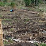 En el 2013 la deforestación fue causada por las plantaciones de cacao y palma aceitera.inforegion.pe.