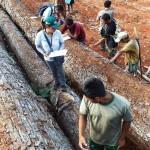 Una brigada especial, conformada por el Serfor, la Policía y la Fiscalia, incautó madera extraída de forma ilegal en comunidad Maranquiari, en Satipo, Junín.