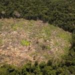 Cooperación noruega y alemana buscan reducir la deforestación en un 50 por ciento. Foto: Inforegion