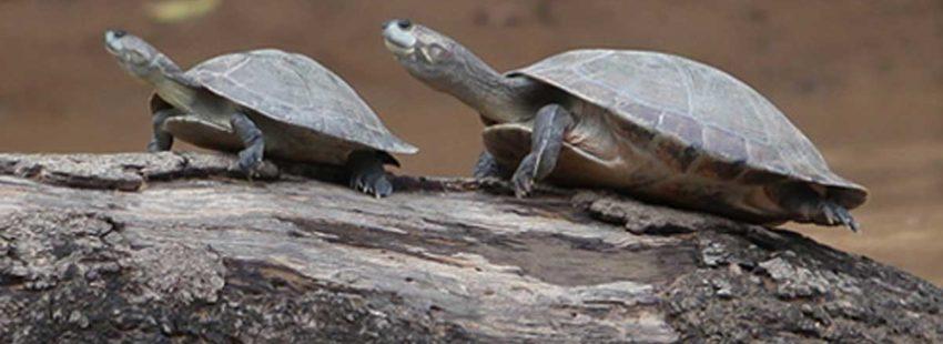 Nuevo estudio advierte que las presas amenazan el futuro de la biodiversidad amazónica
