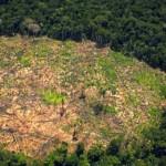 La Amazonía peruana abarca un total de 78'282,060 hectáreas. | Fuente: Foto: SPDA Actualidad Ambiental