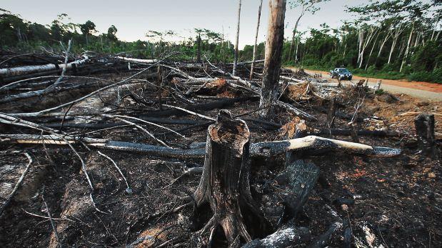 En Loreto y Ucayali desaparecieron más de 60 mil hectáreas en el 2015. (Foto: Rolly Reyna)