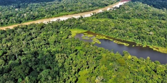 Programa Bosques: 69 poblaciones indígenas se suman a lucha contra la deforestación