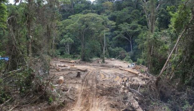 En en setiembre del 2014, Edwin Chota, Jorge Ríos, Leoncio Quinticima y Francisco Pinedo fueron asesinados a manos de presuntos madereros ilegales. (Foto: El Comercio)