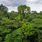 Los 782.800 kilómetros cuadrados de nuestra selva representan el 13% del total de la Amazonía.