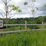 Campo verde. Terrenos de Bosques Amazónicos en Ucayali, hipotecados con frecuencia a empresas offshore.