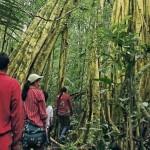 A inicios de marzo, el MTC publicó un Decreto Supremo que fortalece la protección de áreas naturales y pueblos indígenas frente a obras viales. (Foto: referencial)