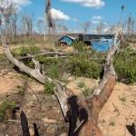 Naturaleza muerta. La tala indiscriminada de árboles por parte de mineros informales no cesa en Madre de Dios. Solo en 2016 se arrasó 164 mil hectáreas en la selva del país.