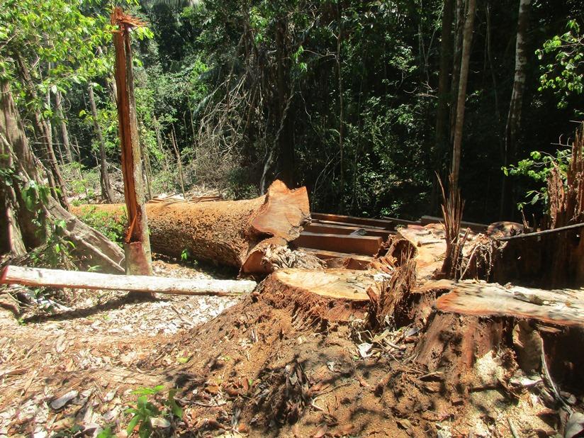 Deforestación dentro de la comunidad. Foto de la comunidad.