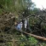 """Según Oxfam, """"más de 150 mil hectáreas de bosques primarios de la Amazonia peruana están en peligro ante el aumento de plantaciones de palma aceitera"""".   Fuente: Foto: AIDESEP"""