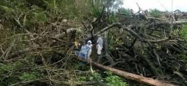"La ""fiebre"" del aceite de palma amenaza la Amazonía peruana"