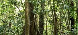 """""""Knoya Supru"""", la nueva Área de Conservación Privada de Madre de Dios"""