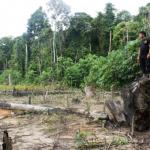 Más de 15 mil hectáreas de bosques se encuentran vigilados por drones por sus propios habitantes.   Fuente: Ernesto Cabral / Ojo-Publico.com