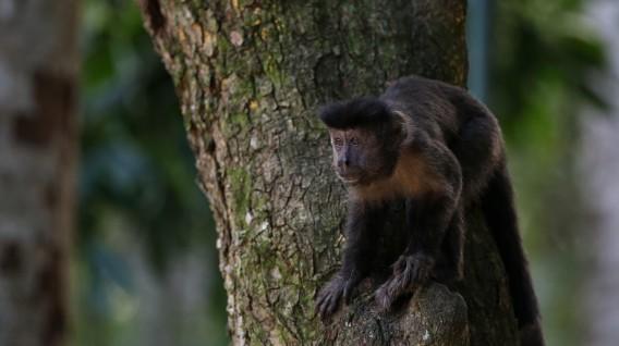 Los bosques amazónicos albergan a muchas especies de animales. Foto: EFE