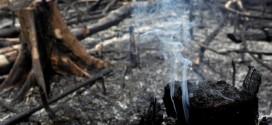 """El CELAM levanta la voz por la Amazonía: """"Si el Amazonas sufre, el mundo sufre"""""""