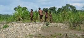 Madre de Dios: Aislados ingresan a comunidad Nueva Oceanía con actitud beligerante