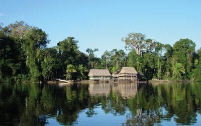 ONAMIAP muestra preocupación por el anuncio del Gobierno de aumentar las concesiones forestales en la Amazonía