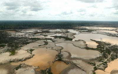 Cómo salvar la selva amazónica