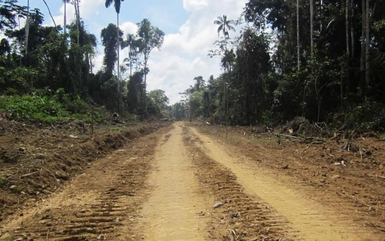 Madre de Dios: denuncian construcción ilegal de pista en territorio indígena