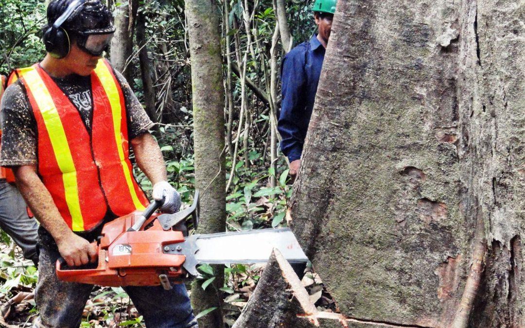 Región Ucayali realiza la primera exportación de madera certificada