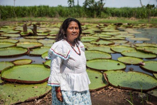Rumbos de selva: abren las inscripciones para el VIII Foro Social Panamazónico