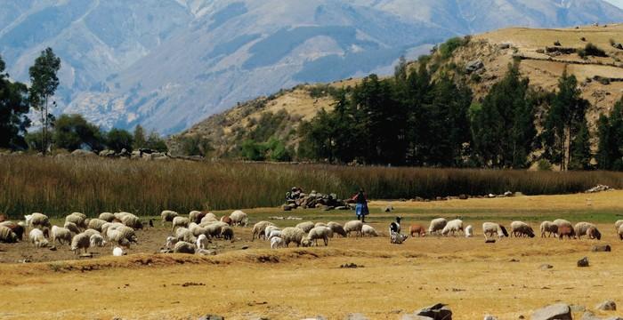 Una gobernanza responsable contribuye a la protección de la tierra y los recursos naturales