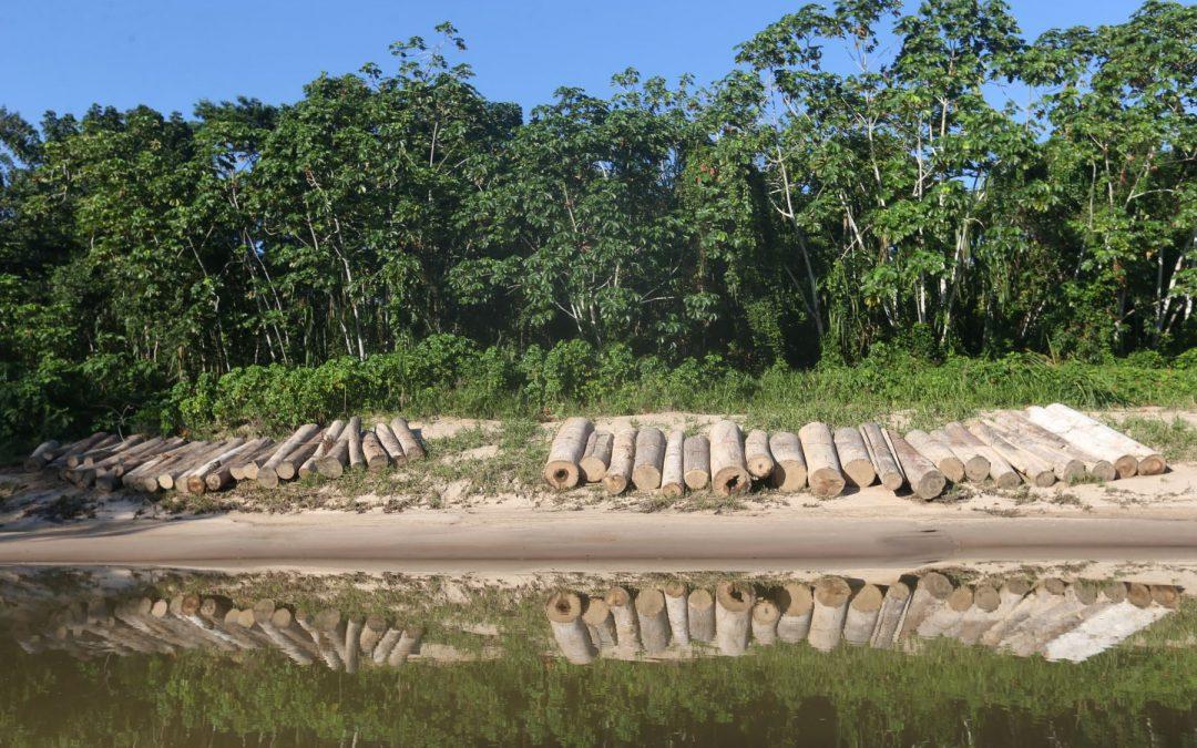 Gobiernos regionales amazónicos se comprometen a reducir deforestación