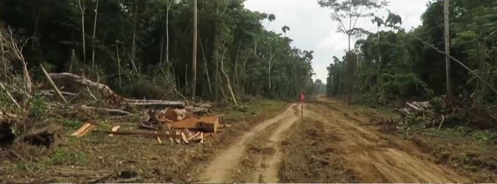 Comunidades indígenas exigen judicialmente anular resoluciones que atentan contra la consulta previa