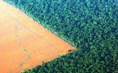 Amazonía: la deforestación amenaza la mitad de las especies de árboles