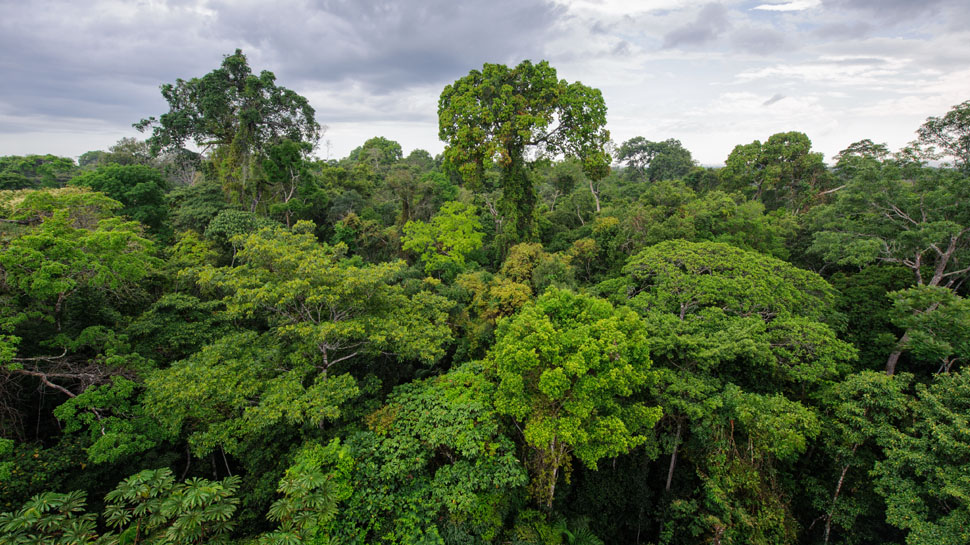 RSE Ambiental: ¿Estamos cuidando nuestros bosques?