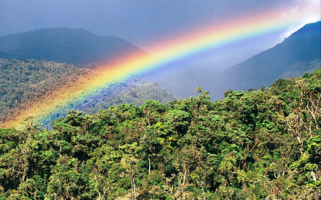Aprueban Estrategia Nacional sobre Bosques y Cambio Climático