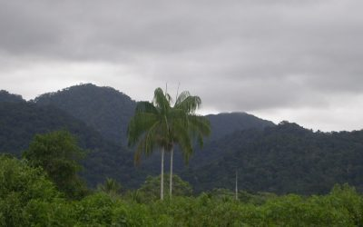 Promulgan 4 reglamentos de Ley Forestal y de Fauna Silvestre