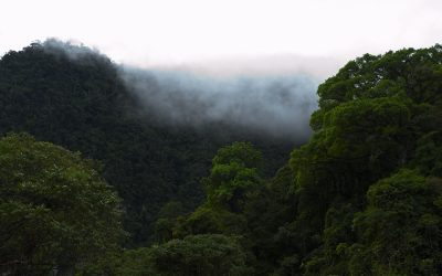 Reconocen al bosque peruano como gran sistema ecológico