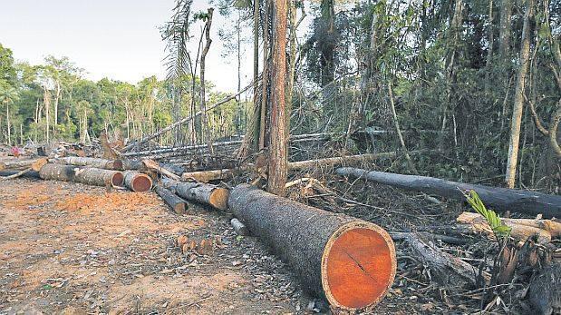 Reanudan concesiones en el sector forestal tras 10 años
