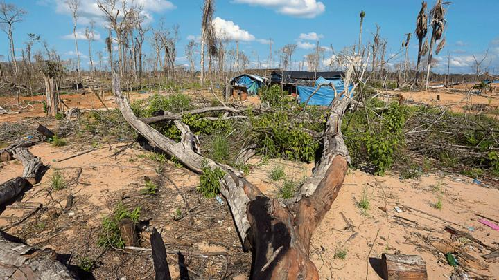 En 16 años el Perú perdió casi 2 mllns de hectáreas de bosques