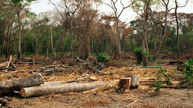ACCA y ACA presentan síntesis sobre los patrones de la deforestación en la Amazonía