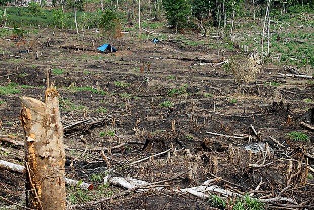 Alarmante crecimiento de la deforestación en zonas de la Amazonía