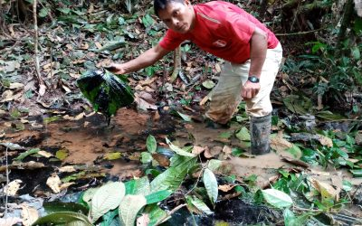 Comunidad Antioquía del alto río Corrientes denuncia derrames de petróleo y malos trabajos de remediación