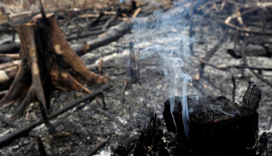 El CELAM levanta la voz por la Amazonía: «Si el Amazonas sufre, el mundo sufre»
