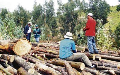 Deforestación ilegal se reduce a menos de la mitad en comunidades implementadas con sistemas satelitales