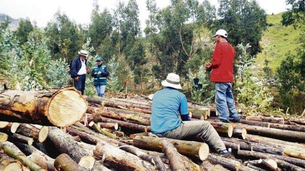 Grupos indígenas denuncian deforestación ilegal de bosques amazónicos