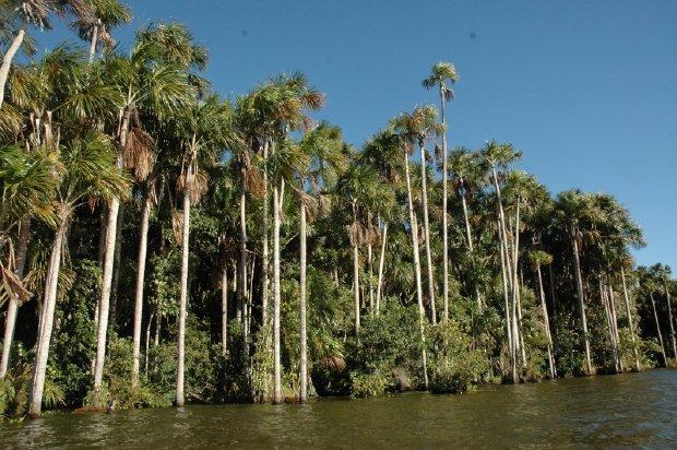 Perú y China se unen para salvaguardar los bosques