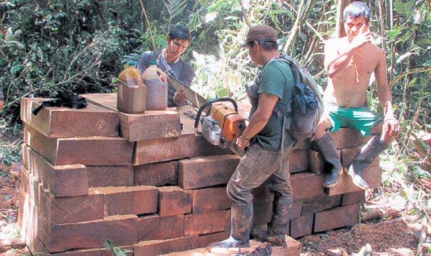 Investigan destino final de madera extraída por mafia