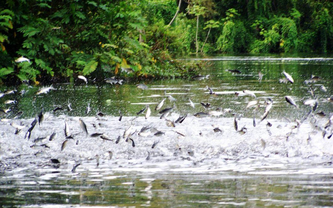"""""""El Estado ha puesto énfasis, que el mijano no debe verse afectado por el tema de la hidrovía amazónica"""""""