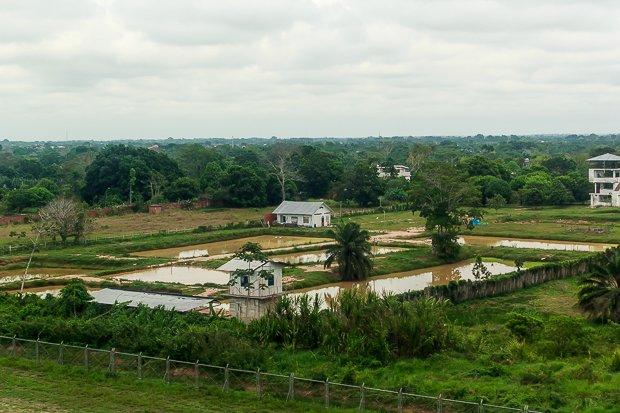 Solicitan a la ONU detener el cultivo de palma aceitera en el país